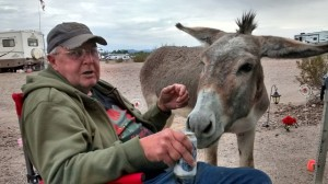 Burro Wants My Beer